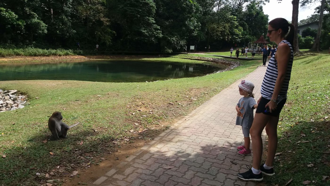 things to do with kids in Singapore-macRitchie reservoir