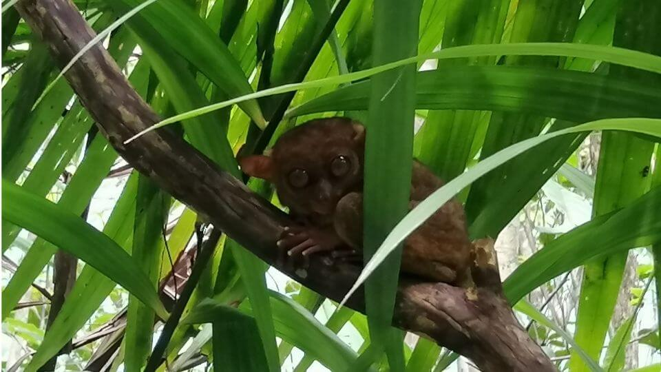 Things to do in Bohol with kids - Philippine Tarsier Conservatory