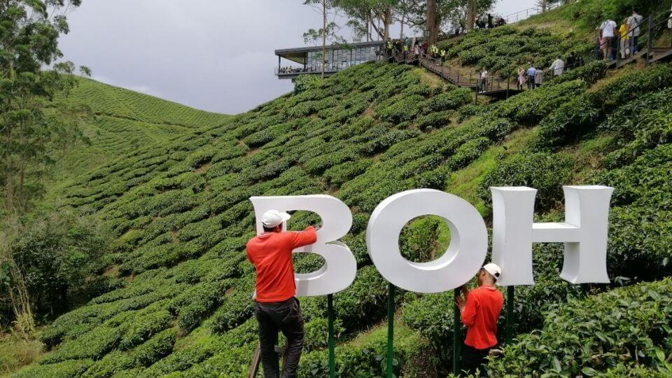 Things to do in the Cameron Highlands-Visit a tea plantation-Boh Tea