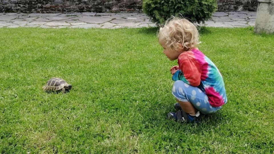 Romy and tortoise-Ohrid old town-North Macedonia